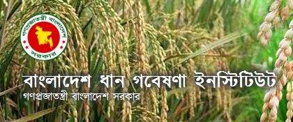 www brri gov bd job circular